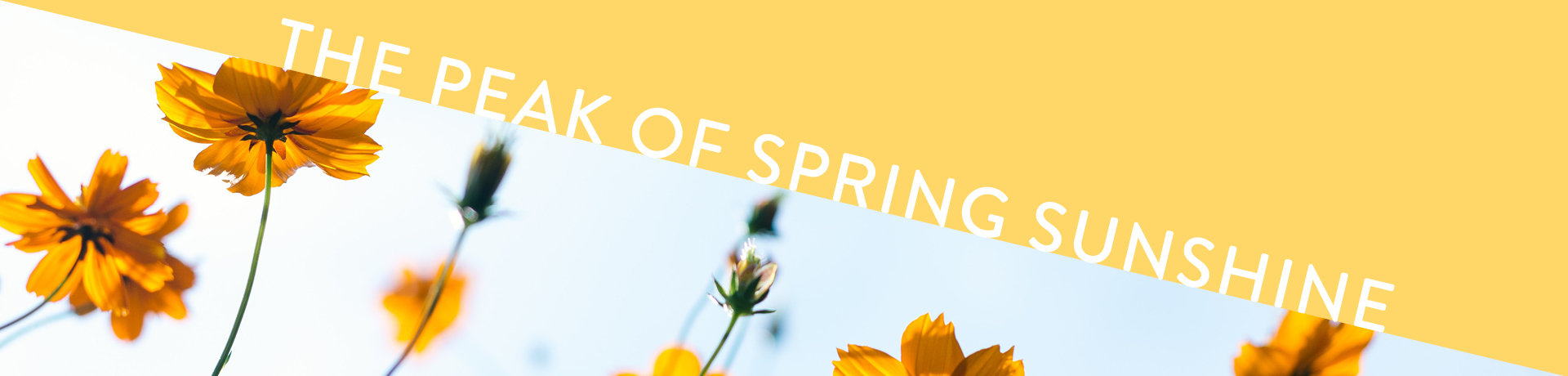 blog spring sunshine